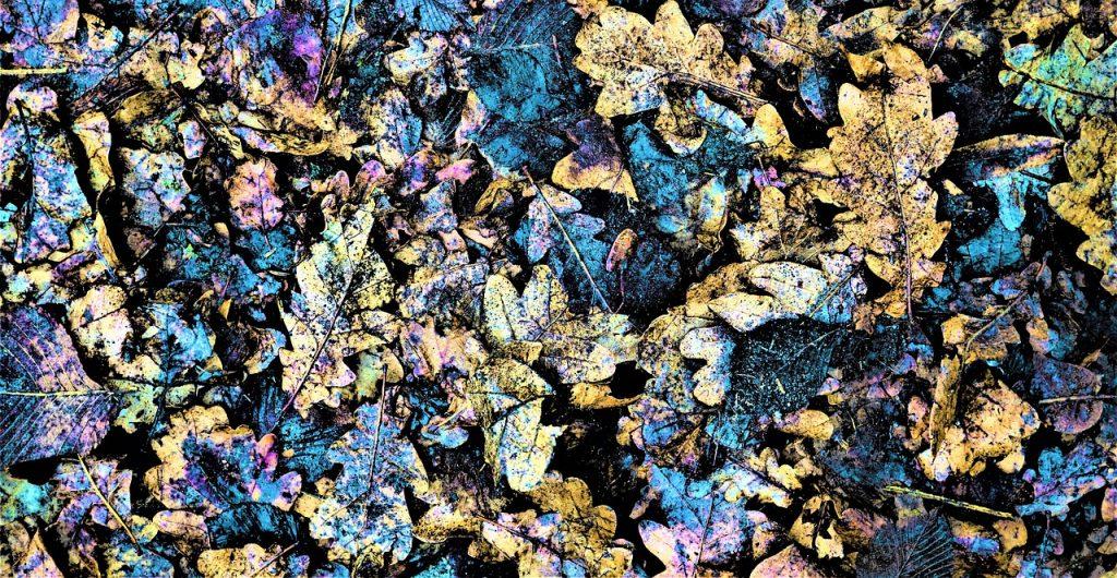 feuilles en décomposition pour le compost en hiver